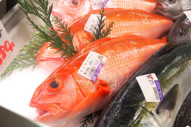 屋久島の鮮魚